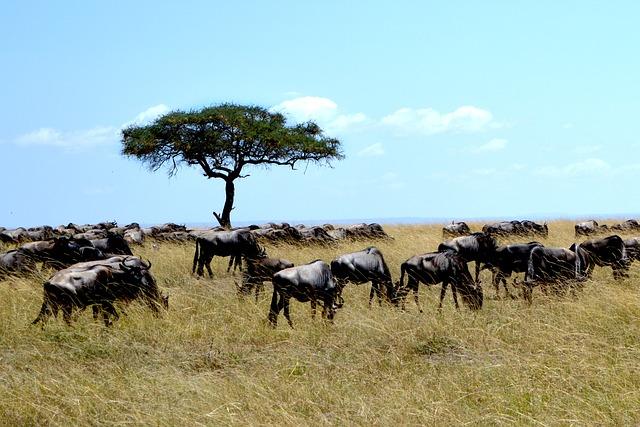 サファリが魅力的すぎるボツワナ共和国