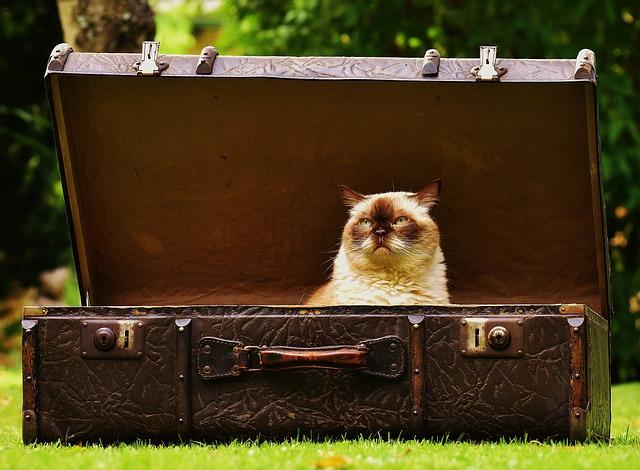【先に旅立った友人からのアドバイス】世界一周の荷物に関して