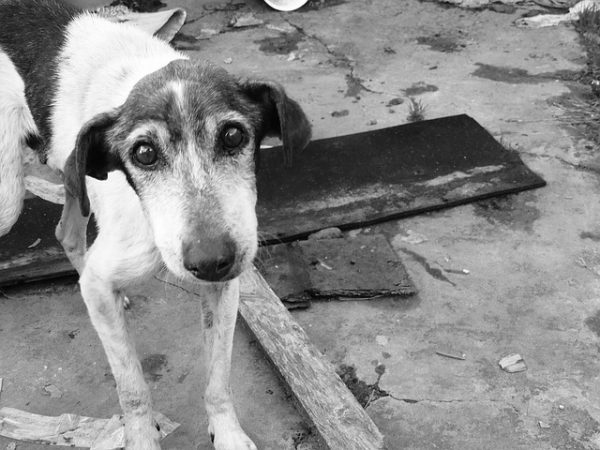 【狂犬病】インドで動物に噛まれた時の対処法と実際に病院に行った話