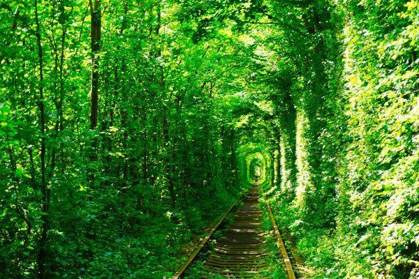 【リヴネ】愛のトンネルへ行き方!最寄りのバス停と撮影ポイント